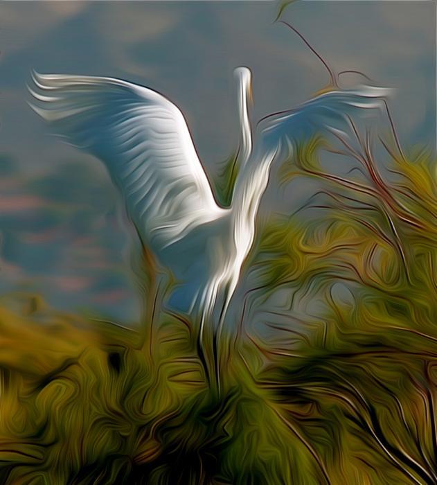 Great Egret Alighting. Photograph by Dan Mangan